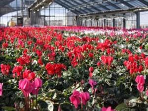 四季の花情報