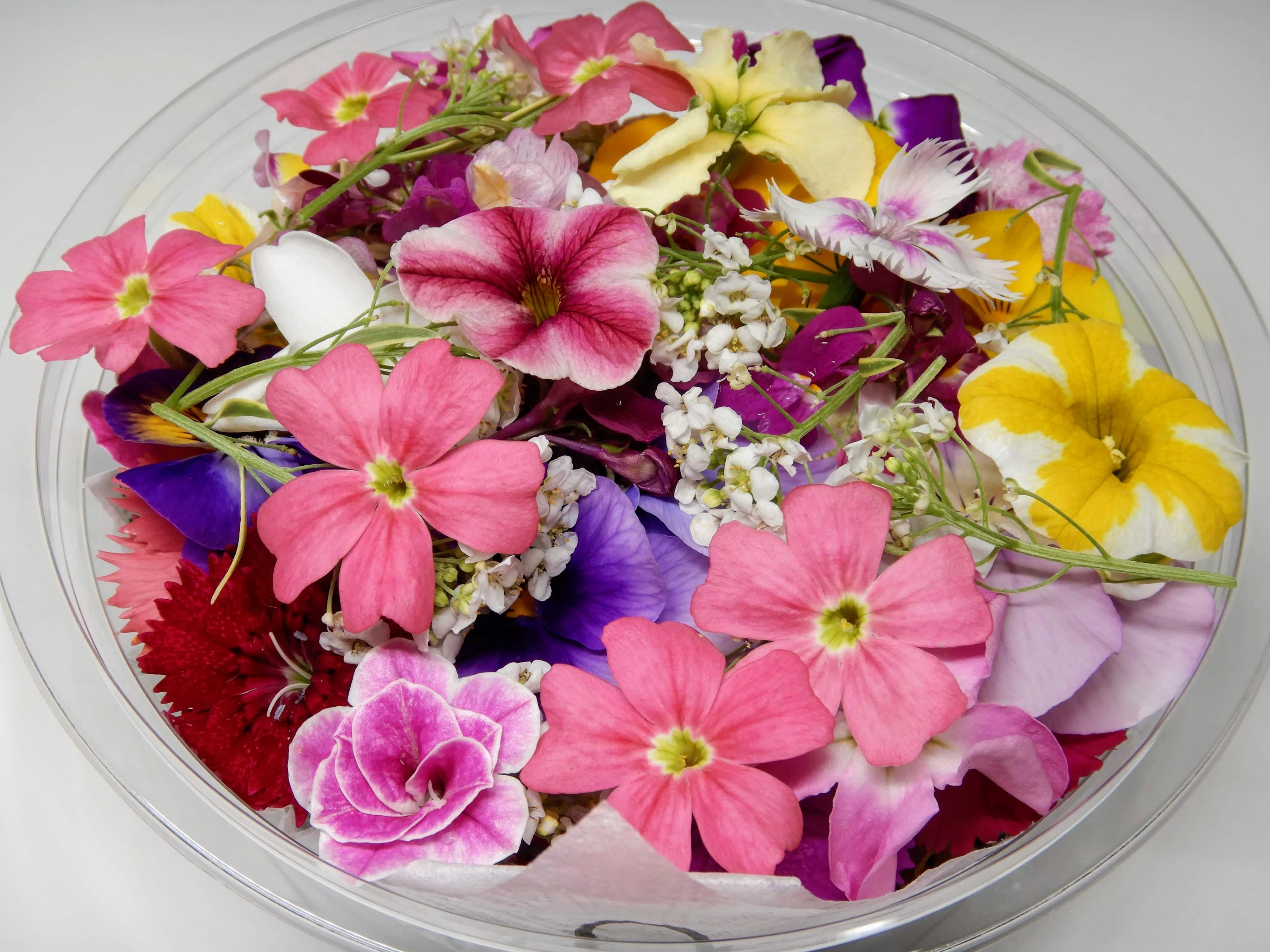 [美食花]エディブルフラワー(食用花)パック