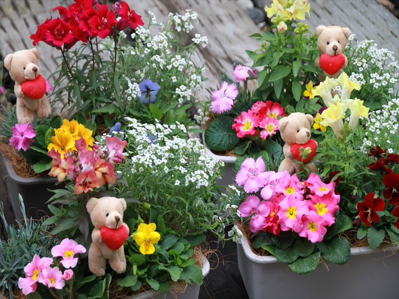 《ギフト対応可!》エディブルフラワーの寄せ植え5種
