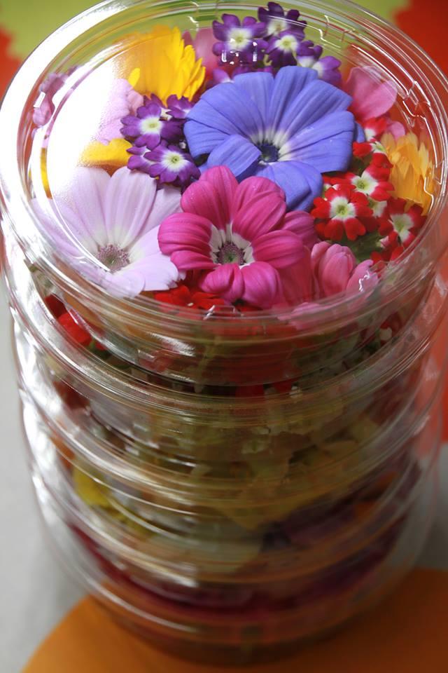 エディブルフラワー「美食花」も春模様♪