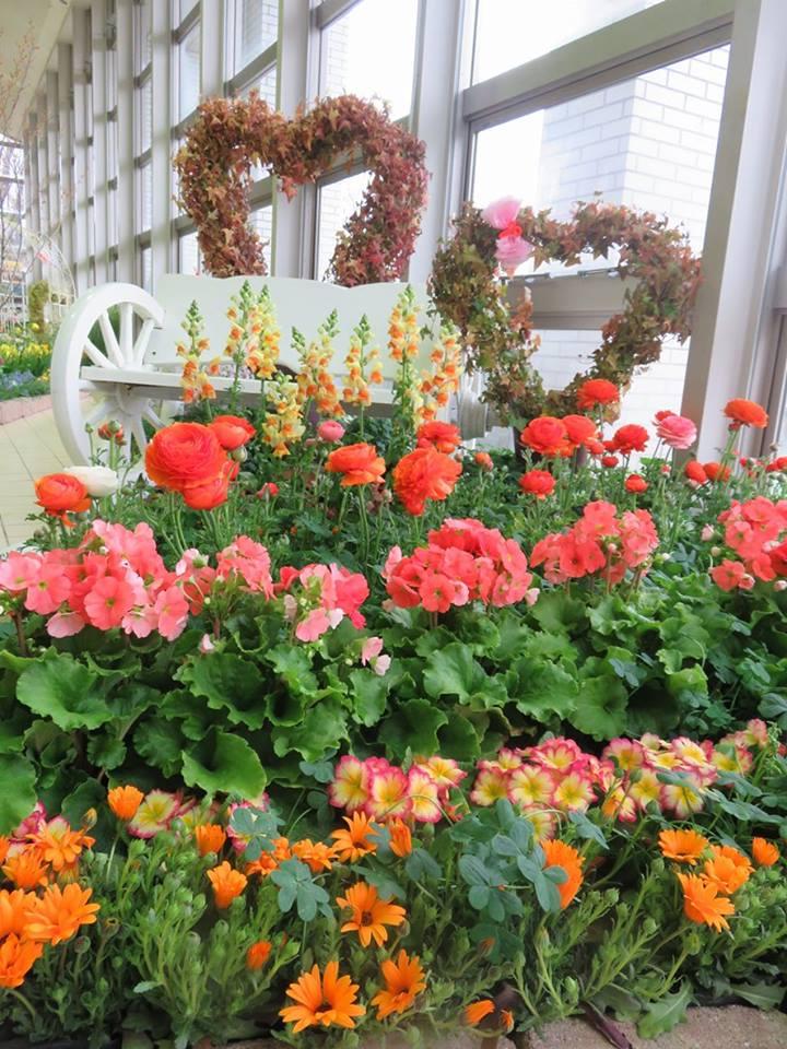 富山県花総合センター「初春の花まつり」
