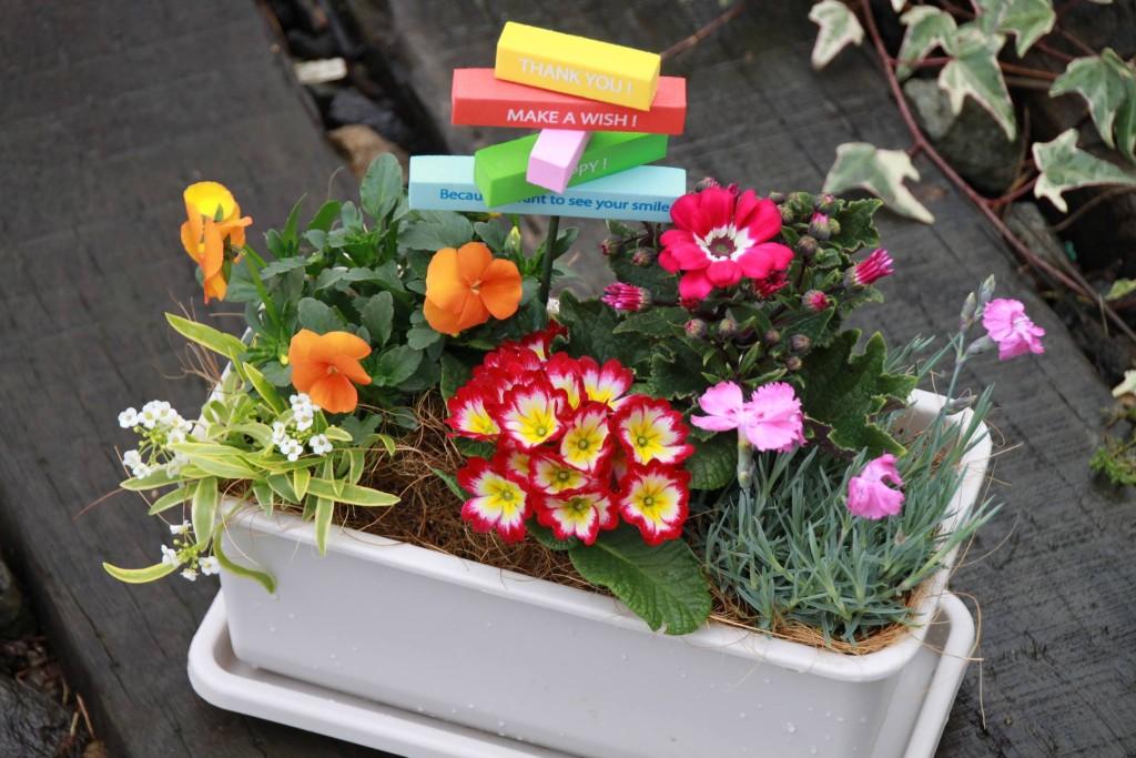 美食花の寄せ植え発送