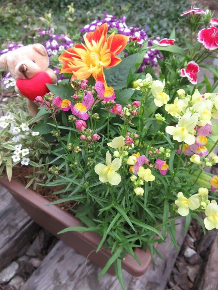 美食花の寄せ植え鹿児島へ発送♪