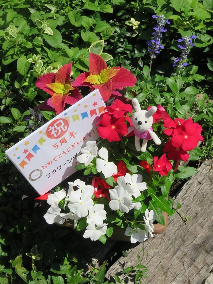 ランソレイエ5周年記念!!