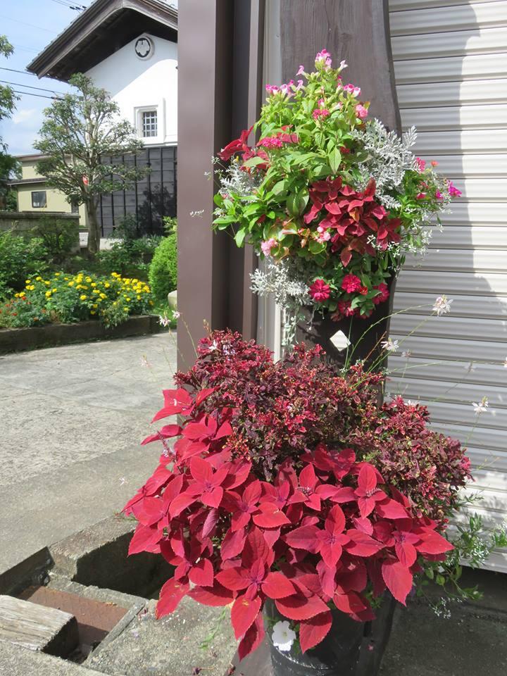 我が家のお庭が花盛り♪
