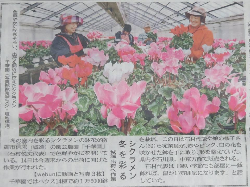 北日本新聞にシクラメンが掲載されました☆