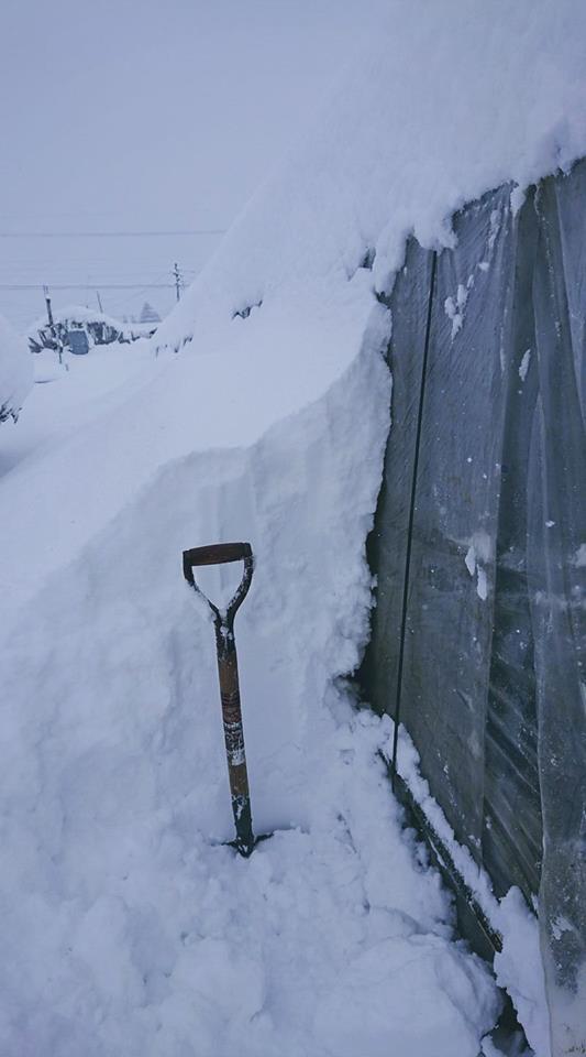 窮地で思いついた「除雪ダイエット」