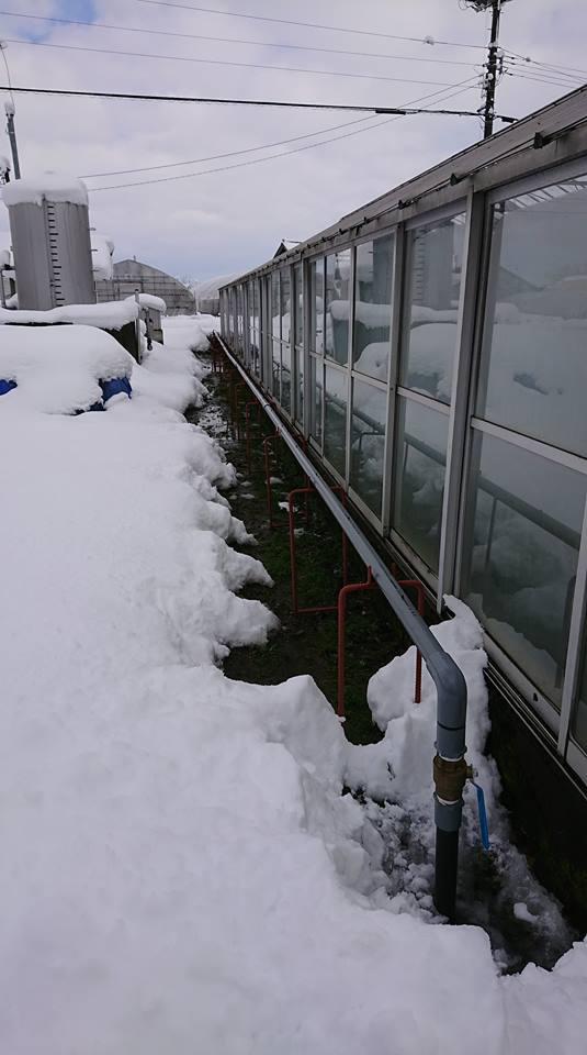 融雪装置絶好調☆