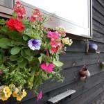 我が家の花いっぱい運動🌸