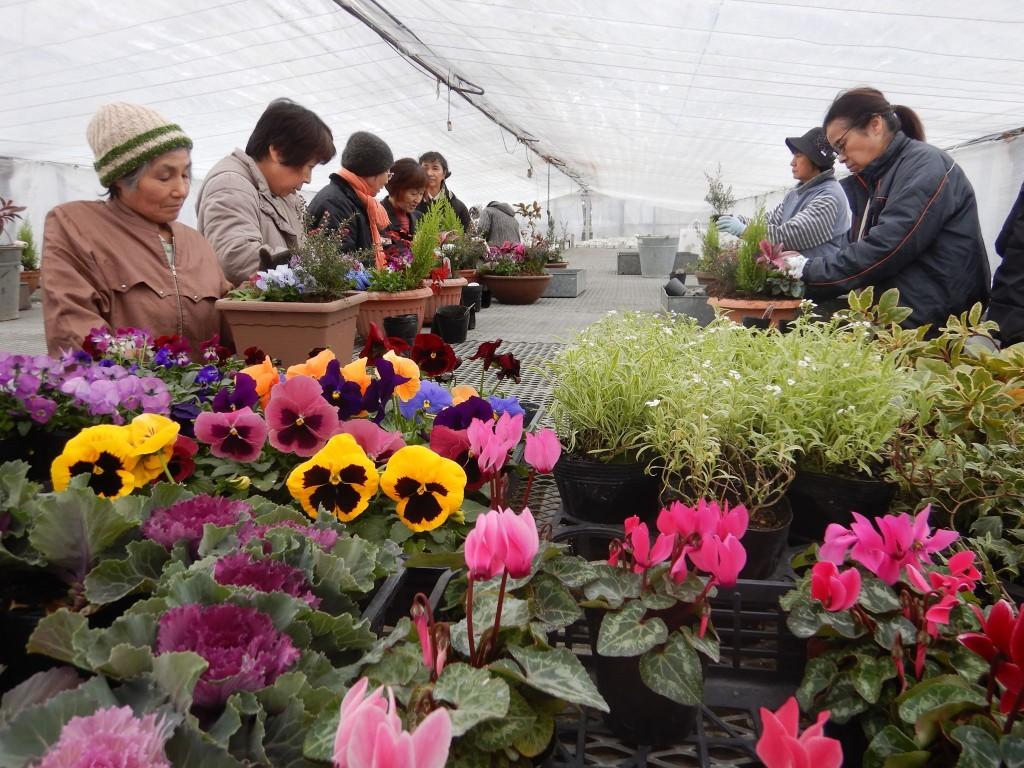 南砺市中核女性農業士寄せ植え🌸