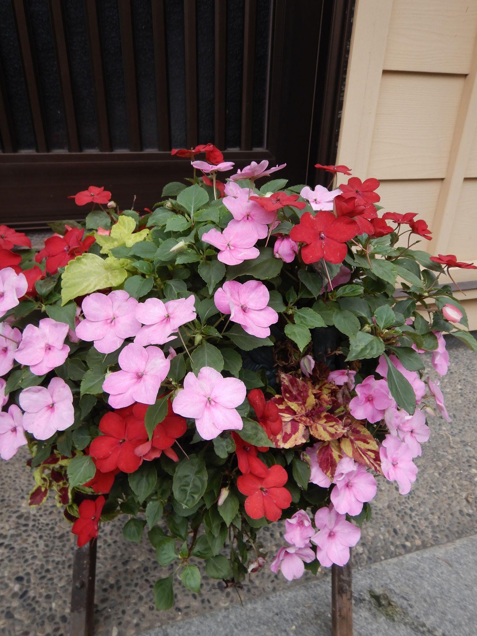 我が家の庭の花🌸