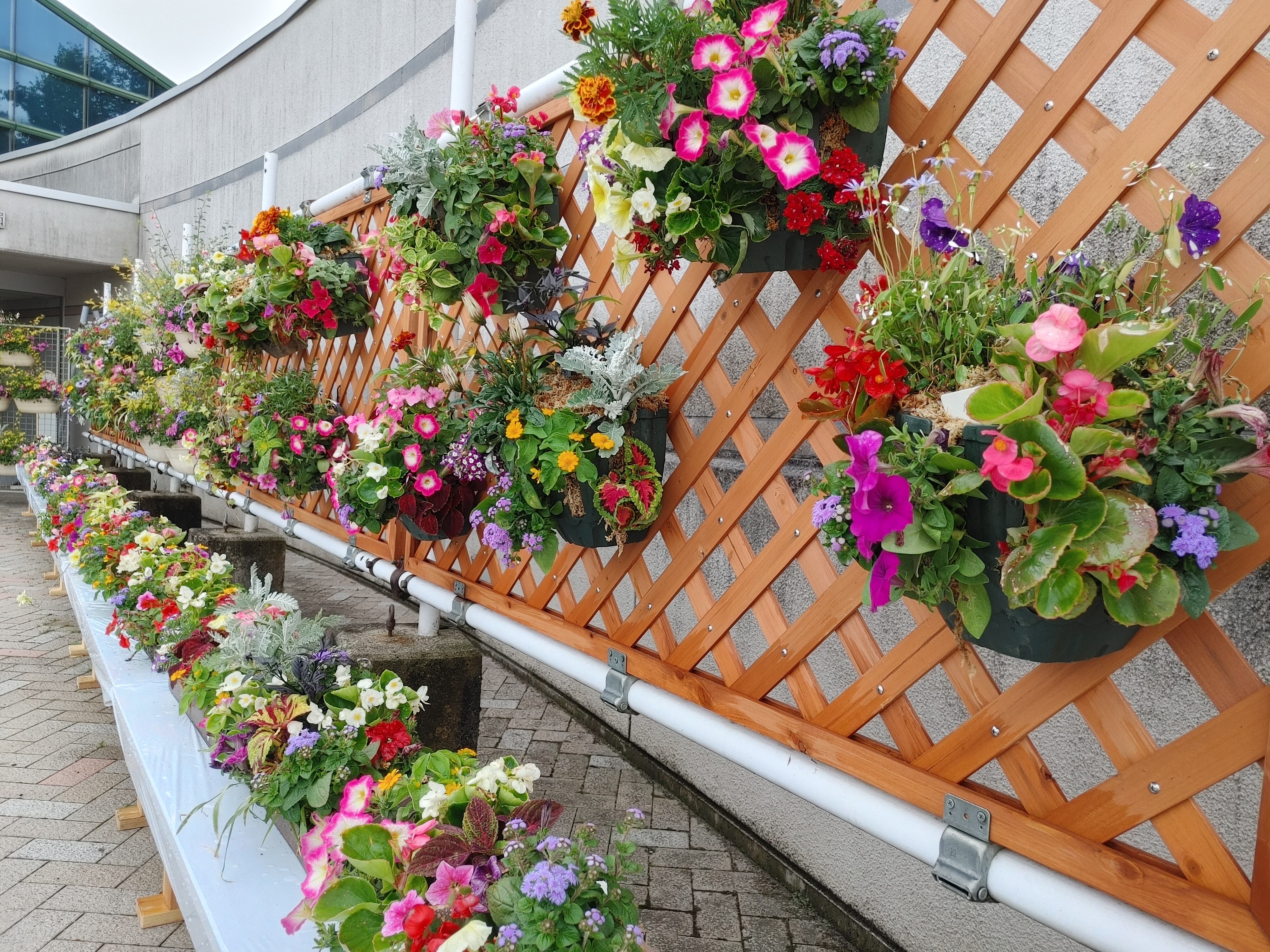 花と緑のフェスティバル会場潜入