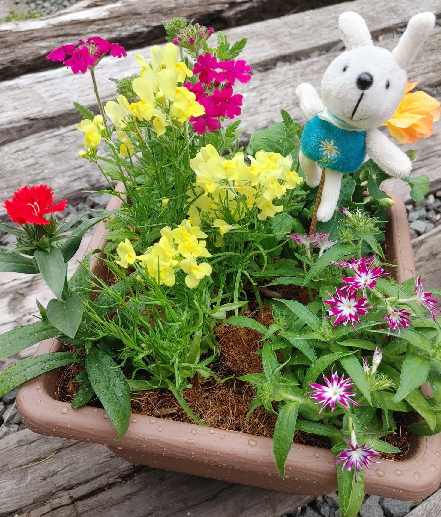 美食花の寄せ植えが人気☆